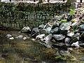 Sligo Creek Wall & Stone (Silver Spring, MD) (5675605800).jpg