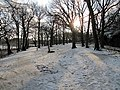 Snö i Eriksberg, Göteborg Jan 2012, Träd, Sol och skugga - panoramio.jpg