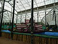 Snap from Lalbagh Flower Show Aug 2013 8160.JPG