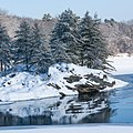 Snowy Pines (11645708764).jpg