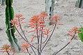 Soap Aloe - Balchik.jpg