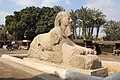 Sphinx of Memphis 2010 6.jpg