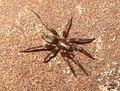 Spider (5655020675).jpg