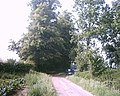 Spinney Lane, Livermere - geograph.org.uk - 488792.jpg