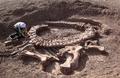 Spinophorosaurus holotype.png