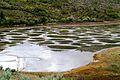 Spotted Lake - panoramio (3).jpg