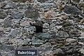 Stadtmauer hofhaimergasse 0531 2013-09-29.JPG