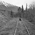 Starbuck, WP&YR tracks near the Watson River (17155890207).jpg