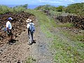 Starr-020422-0067-Bidens pilosa-fenceline road with Art and Ted-Puu o Kali-Maui (23921638373).jpg