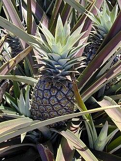 Ananas jadalny
