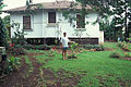 Starr 970503-0337 Plumeria obtusa.jpg