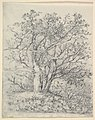 Study for Three Trees MET DP822053.jpg