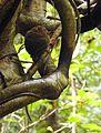 Sulawesi trsr DSCN0503 v1.JPG