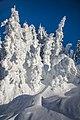 Sun Peaks Ski Resort - more shots amongst the snow ghosts - encased in a winter overcoat (13653679514).jpg