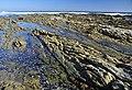 Suráfrica, Port Nolloth 36.jpg