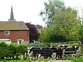 Sutton Bonington Cows - geograph.org.uk - 1292290.jpg