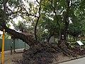 Tainan Park 台南公園 - panoramio.jpg