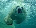 Talini Swimming.jpg