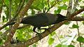 Tamil Nadu bird.JPG