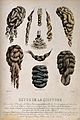 Ten illustrations of different types of wigs and hair pieces Wellcome V0019816.jpg