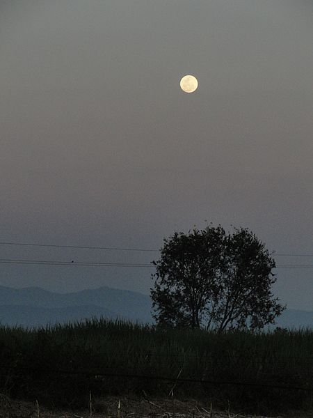 File:Thalavadi - panoramio.jpg