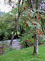 The Afon Irfon south of Abergwesyn, Powys - geograph.org.uk - 1504408.jpg