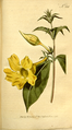 The Botanical Magazine, Plate 338 (Volume 10, 1796).png
