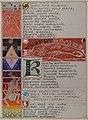 The Great Kalevala- Poem I, verses 301 - 334 (crop).jpg