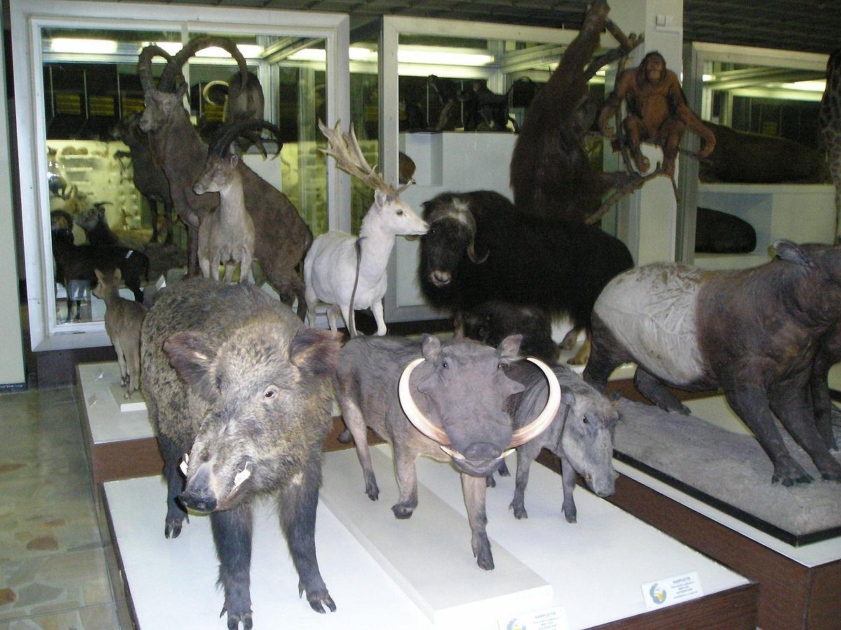 zoological museum kbh kartofler wiki