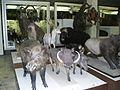 The Tadas Ivanauskas Zoological Museum.jpg