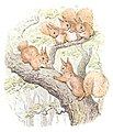 The Tail of Squirrel Nutkin - page 58.jpg