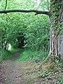 The Ted Ellis Nature Reserve - Surlingham Wood - geograph.org.uk - 1341503.jpg
