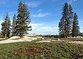 The Top of Yosemite, CA 2015 (28598787682).jpg