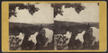 The Valley of the Catskill, from the Heights north-west of the Village, by E. & H.T. Anthony (Firm) 2.png