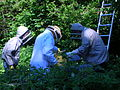 The bee frames are replaced in the hive.JPG