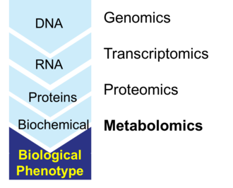 Metabolomics - The central dogma of biology showing the flow of information from DNA to the phenotype. Associated with each stage is the corresponding systems biology tool, from genomics to metabolomics.