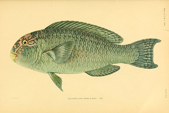 The fishes of Samoa (Plate XLIX) (5998999742).jpg