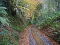 The sunken lane down to Forest Farm - geograph.org.uk - 85161.jpg