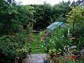The wet garden - Flickr - peganum.jpg