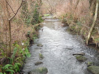 Thornton Creek Creek in North Seattle that empties into Lake Washignton