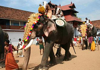 Culture of Kerala - Caparisoned elephants during Sree Poornathrayesa temple festival. The Elephants of Kerala are an integral part of the daily life in Kerala.