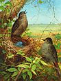 Thrushes' Nest by Fidelia Bridges.jpg