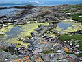 Tidal pools on the north of Eilean Fladday - geograph.org.uk - 627050.jpg