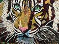 Tigre buvant detail - tiger drinking detail.jpg