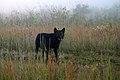 Timber wolves (6778225943).jpg