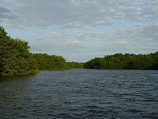 Caroni Swamp The second largest mangrove wetland in Trinidad and Tobago