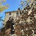 Torkkelinmäen talo ja magnolia toukokuussa 2016.jpg
