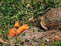 Tortoise and supper (11341927196).jpg