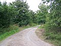 Track to Hurst's Farm - geograph.org.uk - 1428546.jpg