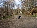 Track to Loch Aslaich - geograph.org.uk - 394043.jpg